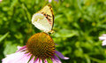 Butterfly on flower in summer garden Stock Photo