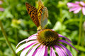 Butterfly on flower in summer garden Royalty Free Stock Photos