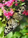 Butterfly on Flowers Stock Photography