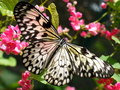 Picture : Butterfly on Flowers tree