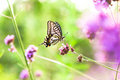 Butterfly on flowers summer field a beautiful Stock Photos
