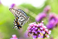 Butterfly on flowers summer field a beautiful Stock Photography