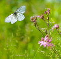 Butterfly flying over flowers close Stock Photography