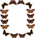 Butterfly frame Stock Photos