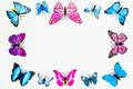 Butterfly frame decoration on white background Royalty Free Stock Photo
