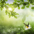 Butterfly, Fresh Spring bokeh background Royalty Free Stock Photo