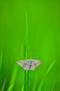 Butterfly froze motionless on a green blade of grass Stock Images