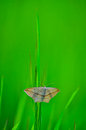 Butterfly froze motionless on a green blade of grass Stock Photography
