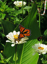 Butterfly Garden Royalty Free Stock Photo
