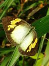 Butterfly grass leaf colors garden Royalty Free Stock Photos