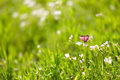 Butterfly on green grass Royalty Free Stock Photo