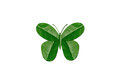 Butterfly by green leaf Stock Images