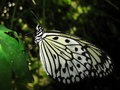 Butterfly on green leaf Stock Image
