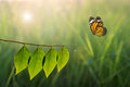 Butterfly and green leaf on sunlight in nature Royalty Free Stock Photo