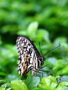 Butterfly on green leaves Stock Photos