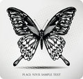 Butterfly hand drawing.Vector Royalty Free Stock Images