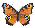 Butterfly inachis io beautiful abstract insects vector illustration Royalty Free Stock Photography