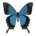 Butterfly isolated on white vector illustration Stock Photo