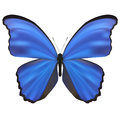 Butterfly isolated on white vector illustration Royalty Free Stock Photography