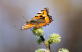 Butterfly (lat. Lepidoptera Linnaeus) Royalty Free Stock Photo