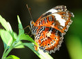 Butterfly on leaf Royalty Free Stock Photo