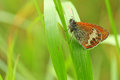 Butterfly on a leaf close-up Royalty Free Stock Photo