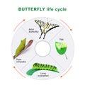 Butterfly life cycle. Metamorphosis.