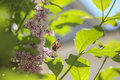 Butterfly at lilac petals at sunny day Royalty Free Stock Photo