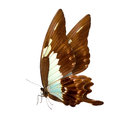 Butterfly macro background colorful beautiful close up a Royalty Free Stock Photo