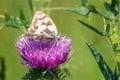 Butterfly macro Royalty Free Stock Photo