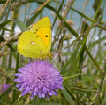 Butterfly (Minois dryas) Royalty Free Stock Photography