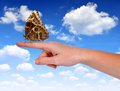 Butterfly morpho sitting on the hand background blue sky Royalty Free Stock Photography