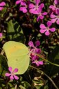 Outdoors and garden with insects no2 Royalty Free Stock Photo