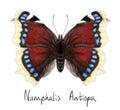Butterfly Numphalis Antiopa. Watercolor imitation. Royalty Free Stock Photo