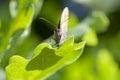 Butterfly on oak leaf Stock Photos