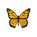 The butterfly with orange wings