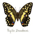 Butterfly Papilio Demodocus. Watercolor imitation. Royalty Free Stock Image