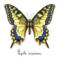 Butterfly Papillo Machaon. Watercolor imitation. Royalty Free Stock Photo