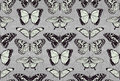 Butterfly pattern background a seamless tiling repeating with beautiful butterflies Stock Image
