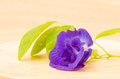 Butterfly pea flower on wooden background Stock Photography