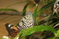 Butterfly picture was taken at s pavilion smithsonian museum washington Stock Photo