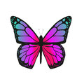 The butterfly with pink wings