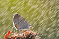 Butterfly in the rain Royalty Free Stock Image