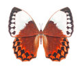 Butterfly red Stock Images