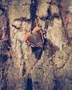 Butterfly Red Admiral C Royalty Free Stock Photo