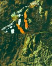 Butterfly Red Admiral D Royalty Free Stock Photo