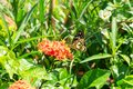a butterfly on a red flower Bali Indonesia Royalty Free Stock Photo