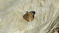 Butterfly on rock found while hiking in california mountains Stock Images