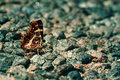 Butterfly on rough pavement fragile sits a asphalt photo in vintage style with place for text Stock Photography