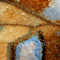 Butterfly scales Royalty Free Stock Photography